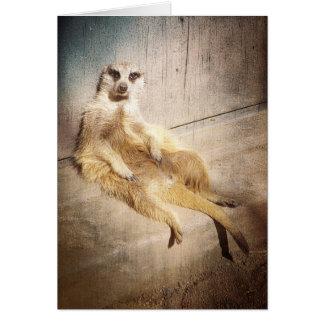 Meerkat divertido que se sienta con de nuevo a la tarjeta de felicitación
