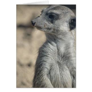 Meerkat divertido tarjeta de felicitación
