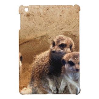 Meerkat dulce