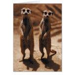 Meerkat Duo Card
