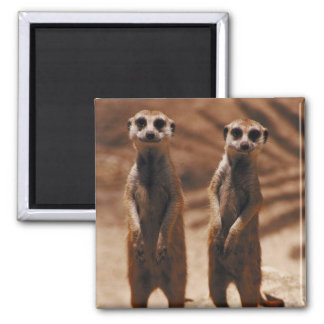Meerkat Duo Magnet
