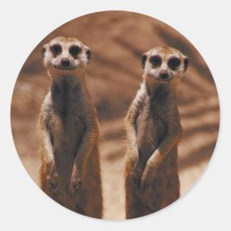 Meerkat Duo Stickers
