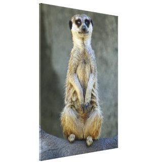 Meerkat en deber de guardia impresiones de lienzo