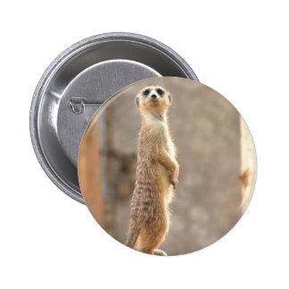 Meerkat en el botón de la atención pin