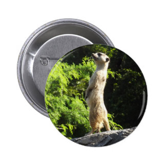 Meerkat- en el reloj pin