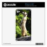 Meerkat- en el reloj skin para el iPhone 4S