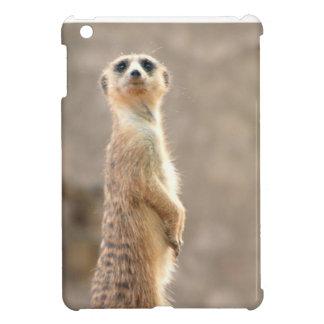 Meerkat en la atención