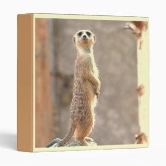 Meerkat en la carpeta de la atención