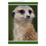 Meerkat en la mirada hacia fuera tarjeton