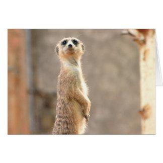 Meerkat en la tarjeta de felicitación de la atenci