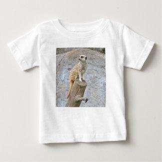 Meerkat en un registro polera