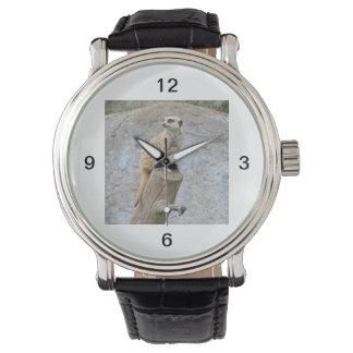 Meerkat en un registro relojes de pulsera