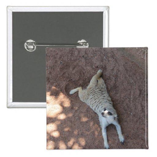Meerkat enfriado pins