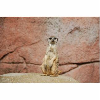 Meerkat Escultura Fotográfica