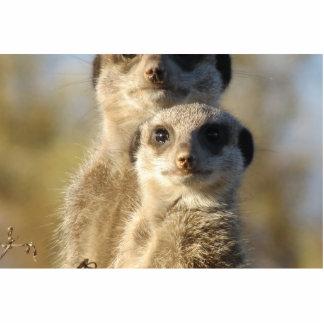Meerkat Escultura Fotografica