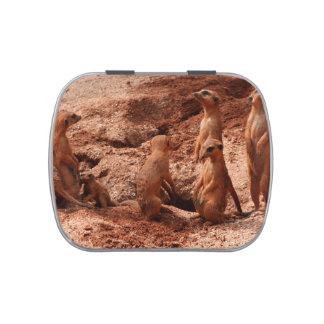 meerkat family animal looking around candy tins