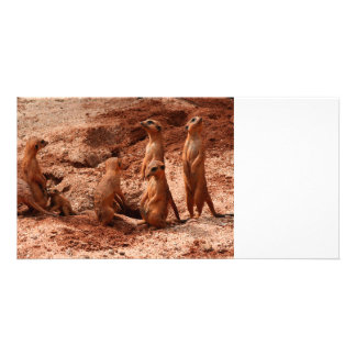 meerkat family animal looking around card