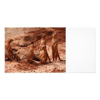 meerkat family animal looking around photo card