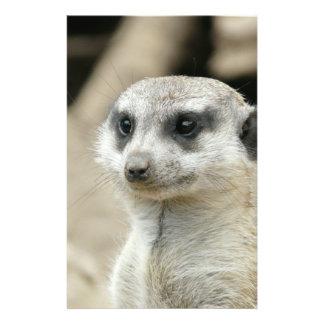 Meerkat Flyer