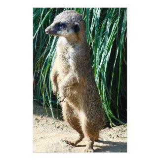 Meerkat Full Color Flyer