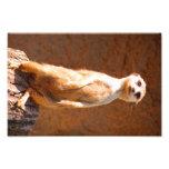 Meerkat Fotografías