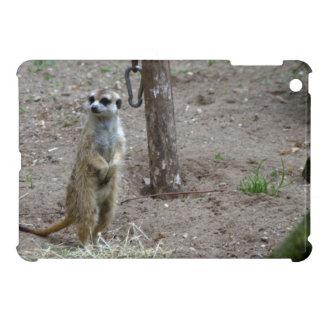 Meerkat iPad Mini Coberturas