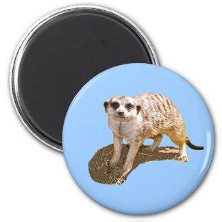 Meerkat Gift Magnets