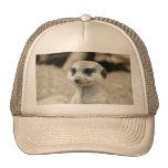Meerkat Gorro De Camionero