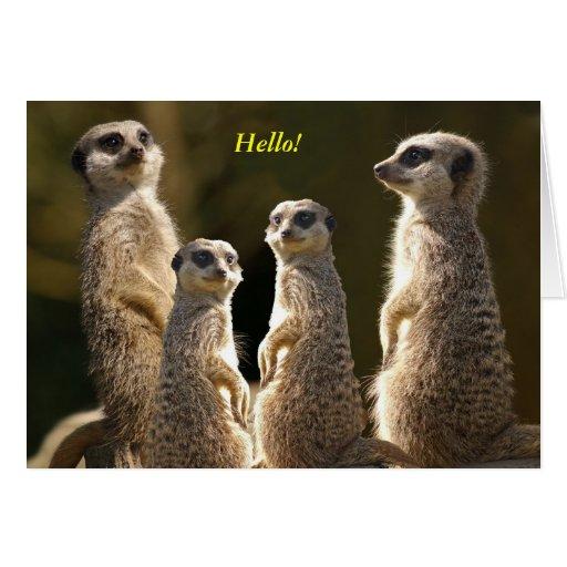 Meerkat group Hello! Greeting Card