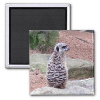 meerkat guard 2 inch square magnet