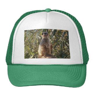 Meerkat_Guard,_Cap Trucker Hat