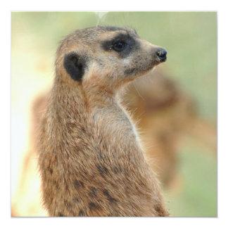 Meerkat Guard Invitations