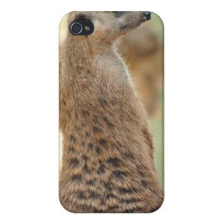 Meerkat Guard iPhone Case Case For iPhone 4