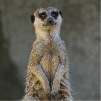 Meerkat Guard Photo Sculpture