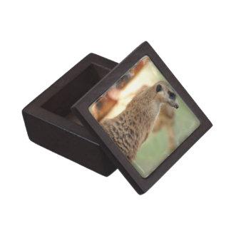 Meerkat Guard Premium Gift Box