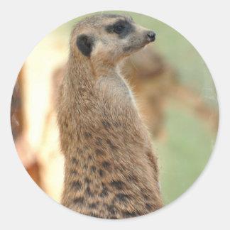 Meerkat Guard Stickers