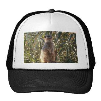 Meerkat_Guard,_ Trucker Hat