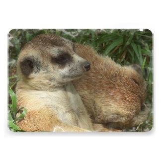 Meerkat Habitat Announcements
