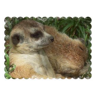 Meerkat Habitat Invitations