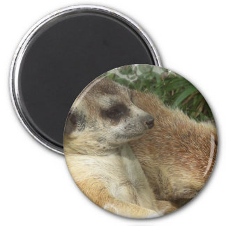 Meerkat Habitat Round Magnet Refrigerator Magnets