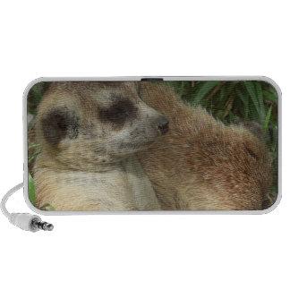Meerkat Habitat Speakers