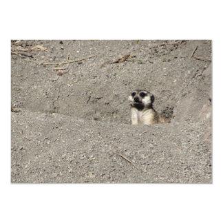 Meerkat haciendo estallar hacia fuera la