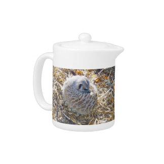 Meerkat_Has_A_Nest_Teapot. Teapot