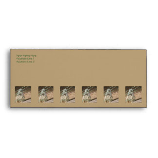 Meerkat Hide and Seek Envelope