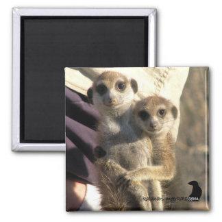 Meerkat Hug a Friend - Magnet