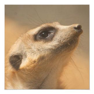 """Meerkat Invitación 5.25"""" X 5.25"""""""