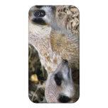 Meerkat iPhone 4 Carcasas