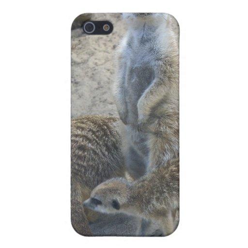 Meerkat iPhone 5 Protectores