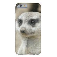 Meerkat iPhone 6 Case