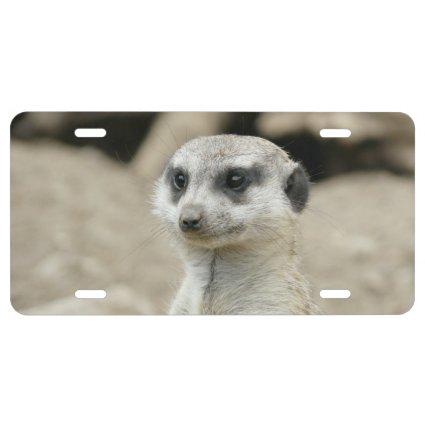 Meerkat License Plate